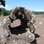 Lake Superior Driftwood